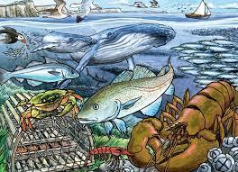 COBBLE HILL Life in the Atlantic Ocean 58804