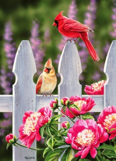 COBBLE HILL - Cardinals and Peonies