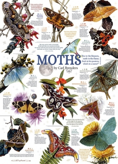 COBBLE HILL - Moth Collection