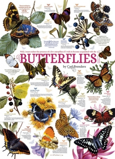 COBBLE HILL - Butterfly Collection