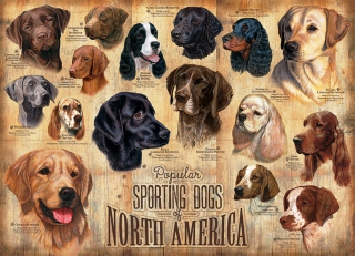 COBBLE HILL - Sporting Dogs
