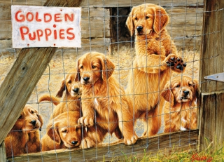 COBBLE HILL Golden Puppies